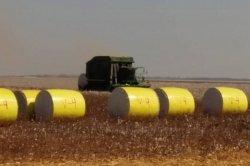 O algodão no campo